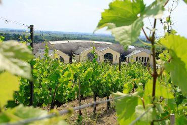 Festiwal wina w Tokaju